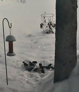 feedingbirds